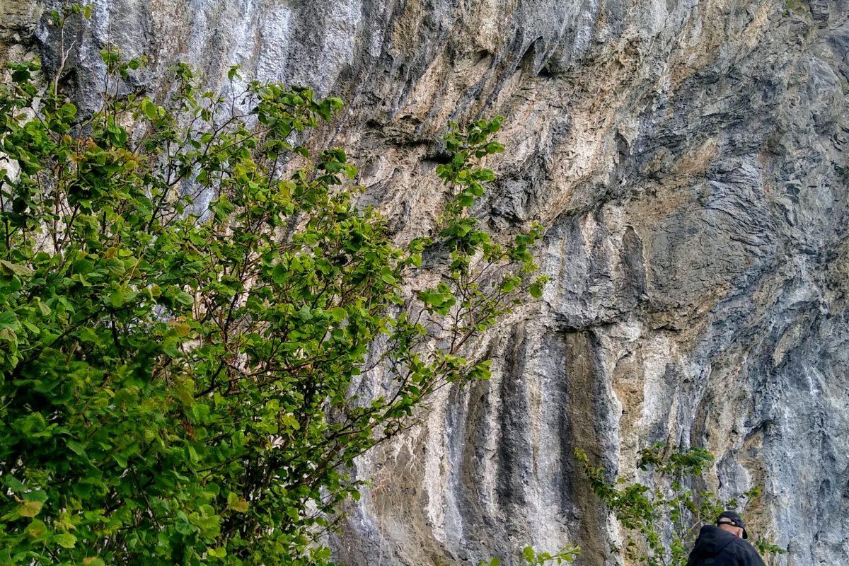Photo from walk: Raised beach cliff