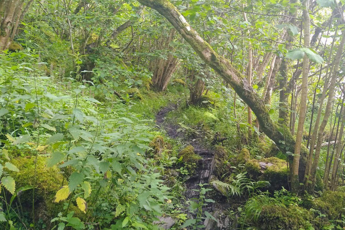 Photo from walk: Dense woods