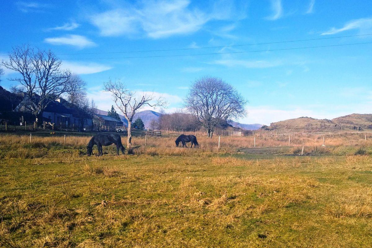 Portcastle horses