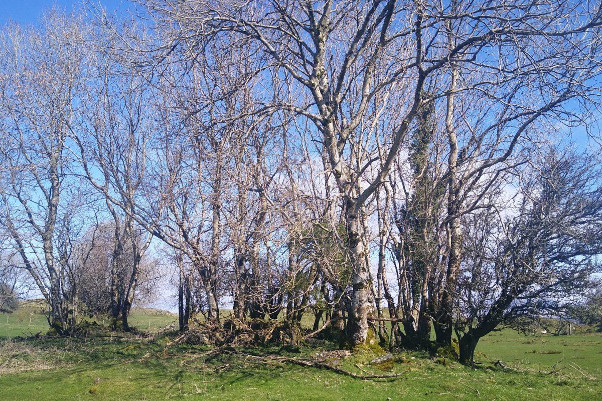 Winter TreesWinter Trees