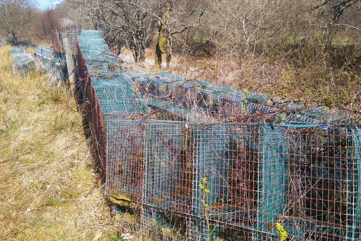 Endless small rusting mink cages Appin