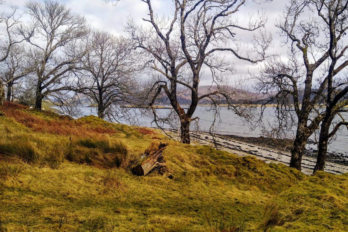 Ash trees near Point